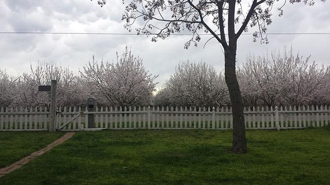 Occupying Farm