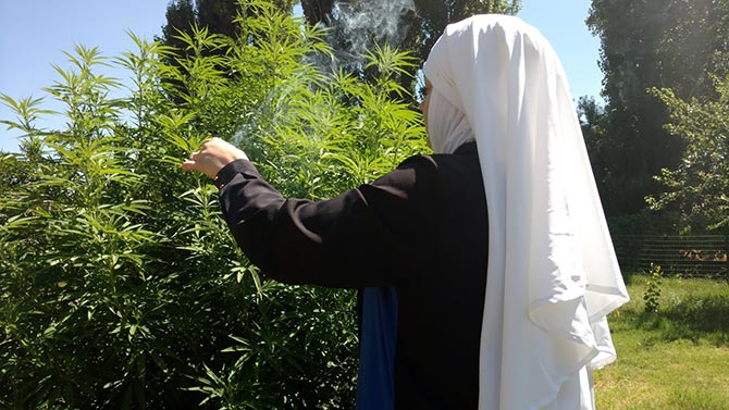 Taking Cannabis Leaves
